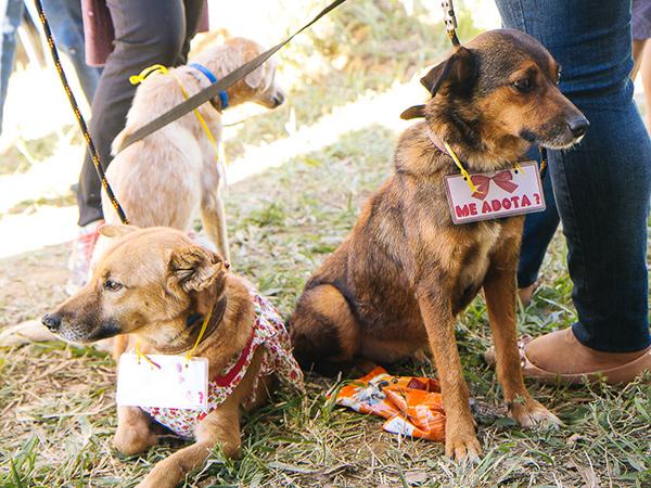 Animais para adoção devem ser levados saudáveis e higienizados. A doação dos animais passará, obrigatoriamente, por aprovação do Grupo Adote