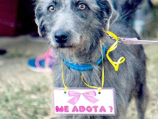 Animais para adoção responsável estarão no local