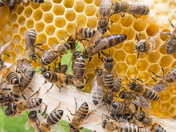 Curso visa a aumentar a eficiência da apicultura tradicional