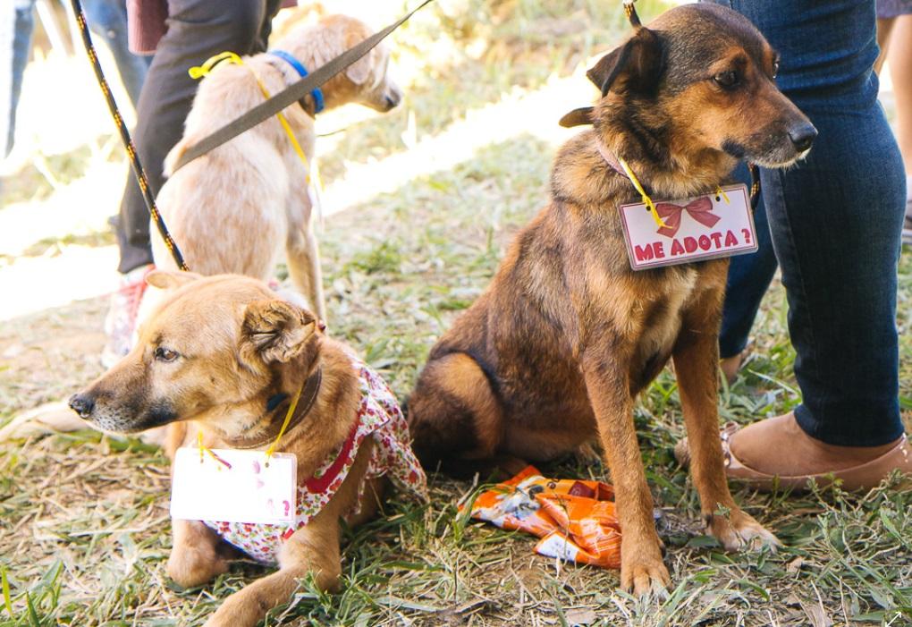 O evento tem o objetivo de apresentar o abrigo e estimular a adoção dos animais