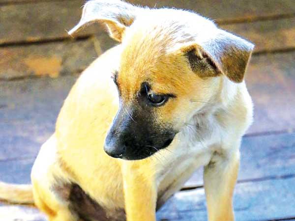 """""""Feira de Adoção de Pets"""" busca lares para cães e gatos"""