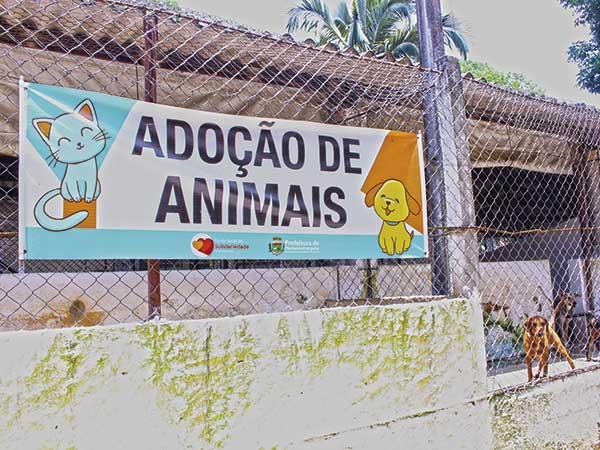 Abrigo está aberto para adoção de  cães e gatos