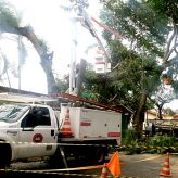 EDP atende 3.414 ocorrências de vegetação na rede elétrica na região