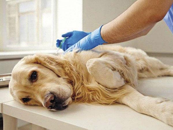 Programa de castração de animais oferece 100 vagas para Castolira